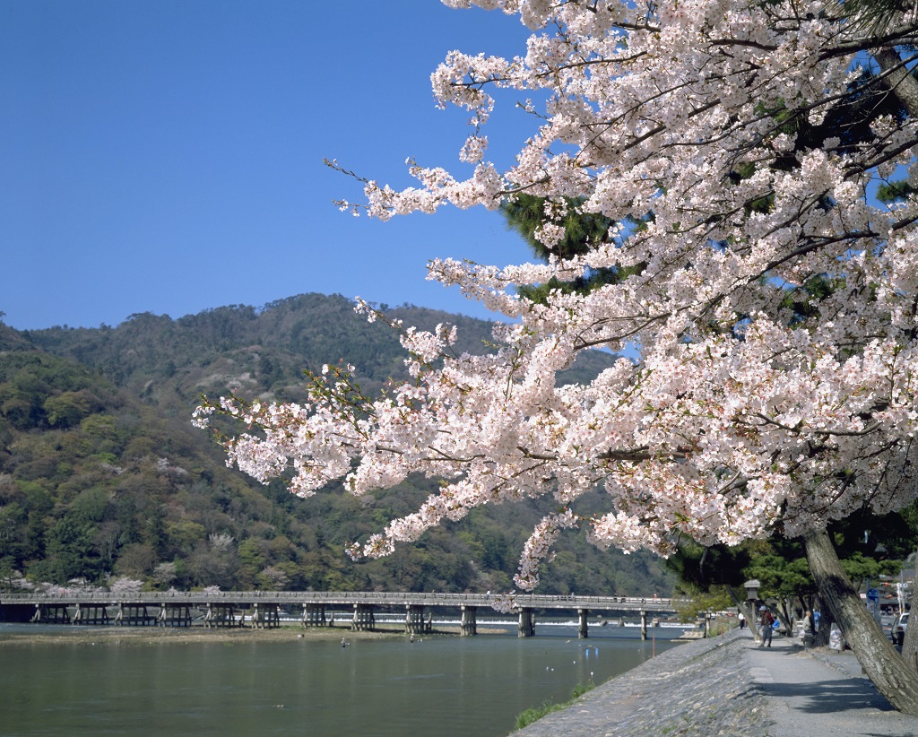 Weather In Kyoto When Is The Best Time To Visit
